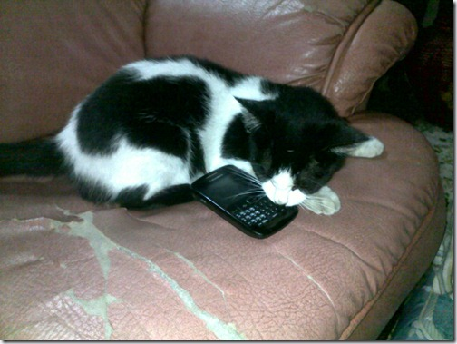 kucing blackberry user